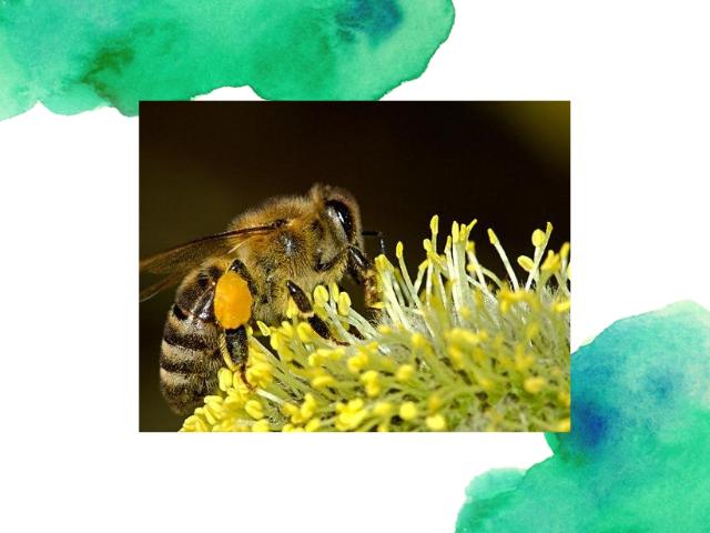 ROPALL méhek világa